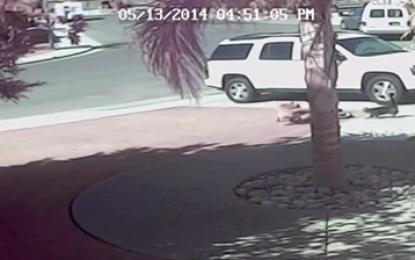 Un gato salva a un niño del ataque de un perro en California